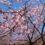 広尾町の花情報
